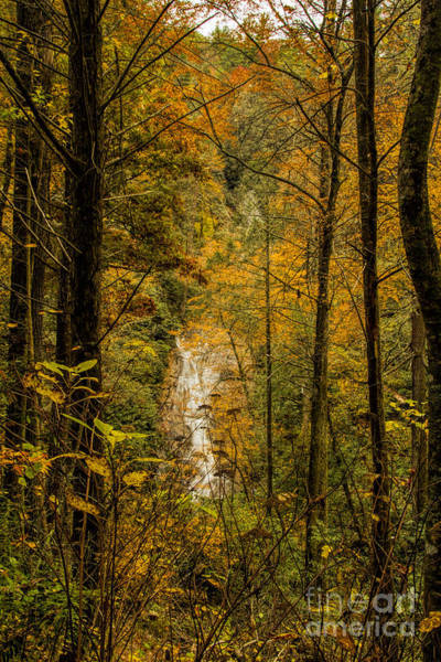 Photograph - Helton Falls Through The Leaves by Barbara Bowen