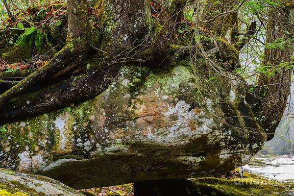 Photograph - Hemlock On Rock by Thomas R Fletcher