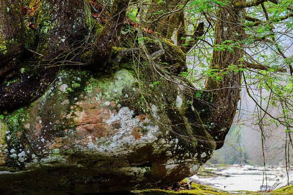 Photograph - Hemlock On Rock Williams River by Thomas R Fletcher