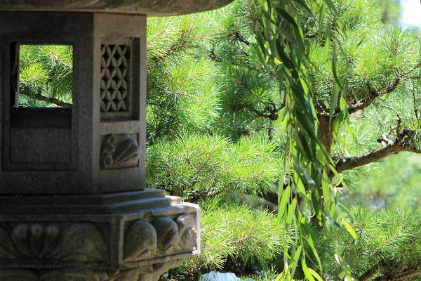 Photograph - Hemlock Pagoda With Willow And Evergreen by Colleen Cornelius