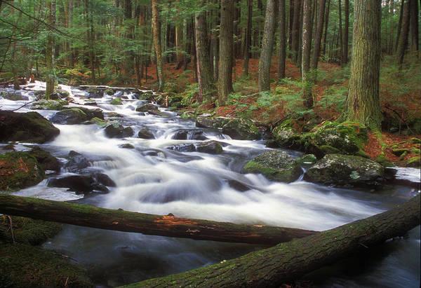 Rutland Photograph - Hemlock Stream In Spring by John Burk