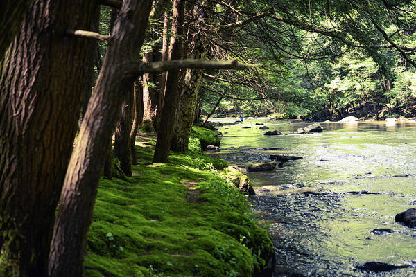 Laurel Hill Creek Photograph - Hemlock Trail by Shelley Smith