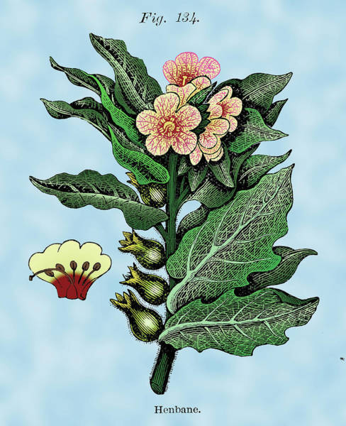 Wall Art - Digital Art - Henbane by Ziva
