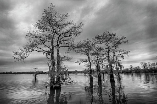 Photograph - Henderson Swamp Wetplate by Andy Crawford