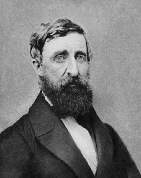 Wall Art - Photograph - Henry David Thoreau Portrait - 1861 by War Is Hell Store