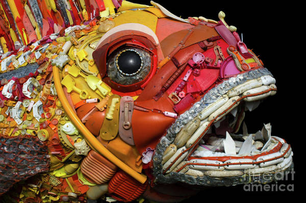 Wall Art - Photograph - Henry The Fish 2 by Bob Christopher
