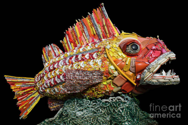 Wall Art - Photograph - Henry The Fish by Bob Christopher