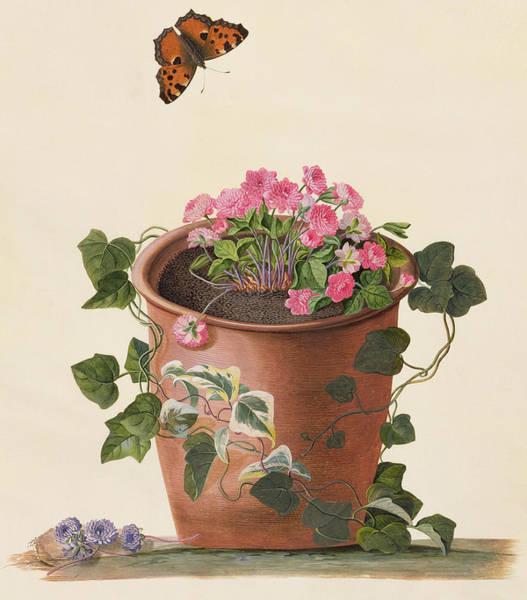 Terracotta Painting - Hepatica Trifolia by Georg Dionysius Ehret