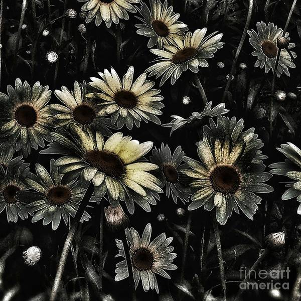 Photograph - Her Daisies by Jacqueline McReynolds