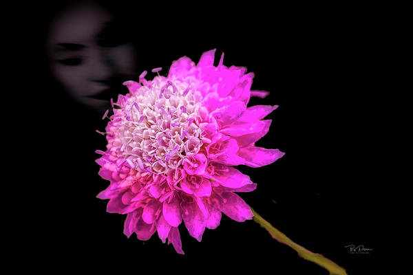 Photograph - Her Flower by Bill Posner