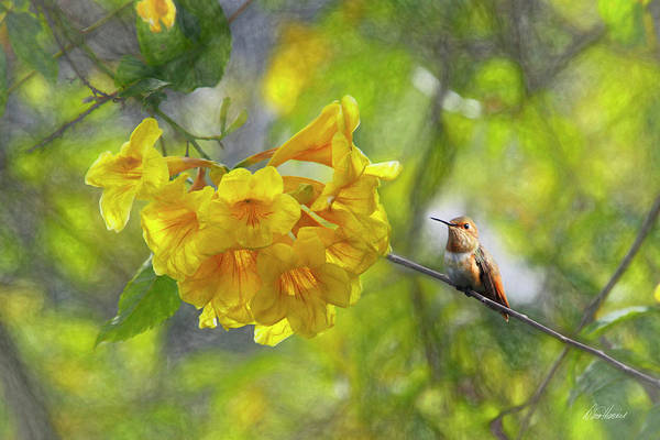 Photograph - Herald Of Spring by Diana Haronis
