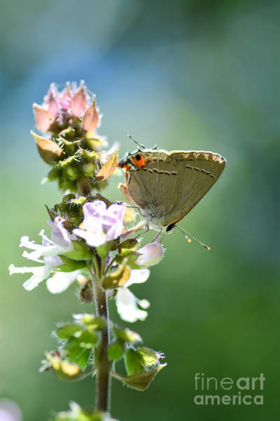 Bokah Photograph - Herb Visitor by Debbie Green