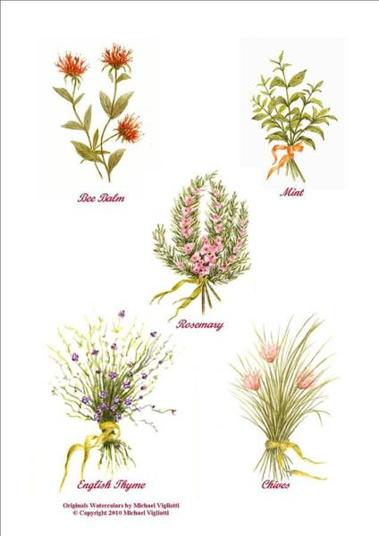 Rosemary Painting - Herbs Montage Number One by Michael Vigliotti