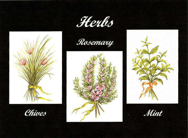 Rosemary Painting - Herbs Montage Number Two by Michael Vigliotti