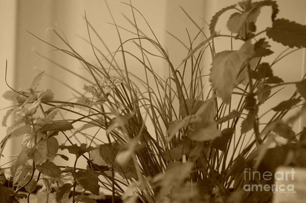 Photograph - Herbs by Donna Bentley