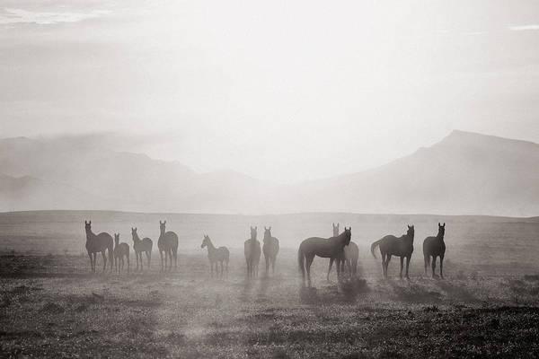 Foal Photograph - Herd #3 by Artur Baboev