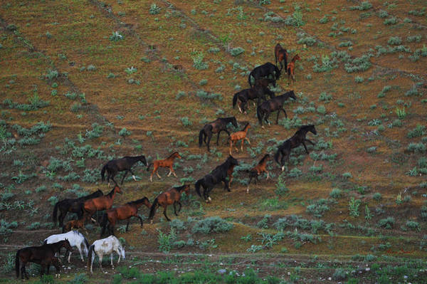 Wall Art - Photograph - Herd #5 by Artur Baboev
