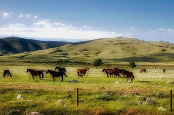 Laramie Photograph - Herd Of Horses On The Laramie Plain by Mountain Dreams