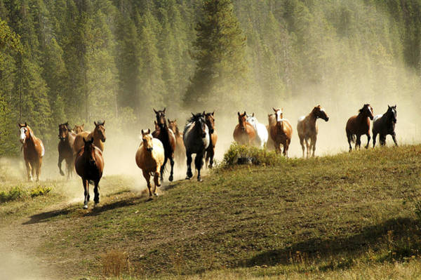 Photograph - Herd Of Wild Horses by Scott Read