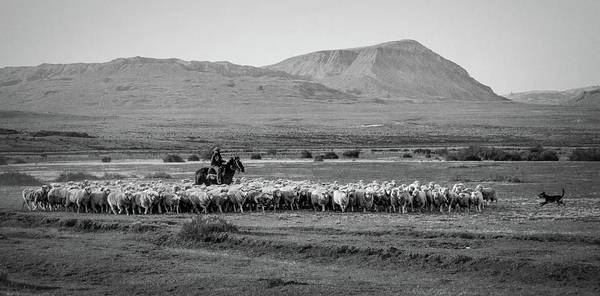 Photograph - Herding Sheep - Patagonia by Stuart Litoff