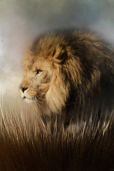 Photograph - Here Comes The King by Jai Johnson