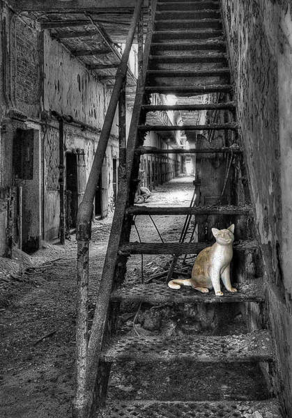 Prison Photograph - Here Kitty Kitty Kitty... by Evelina Kremsdorf