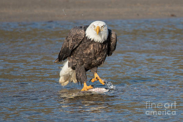 Mission Bc Photograph - Here's Staring At You by Rod Wiens