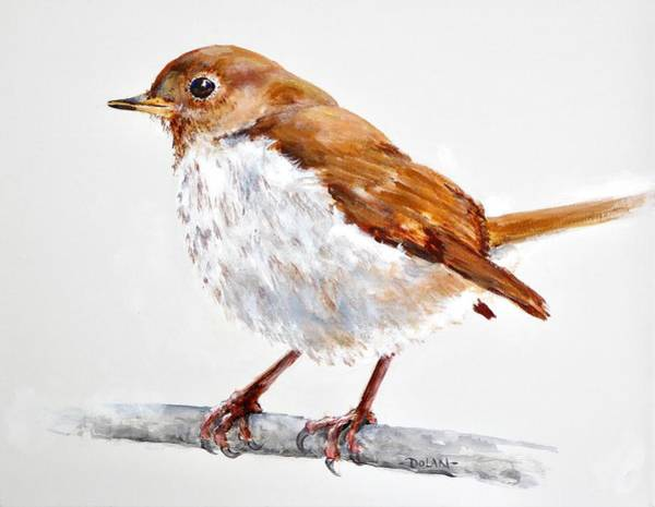 Painting - Hermit Thrush - Best 2017 - Acrylic by Pat Dolan