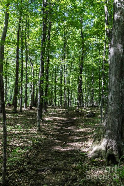 Photograph - Hermit Trail by William Norton