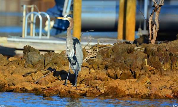 Photograph - Heron Along The Shore by Lisa Wooten