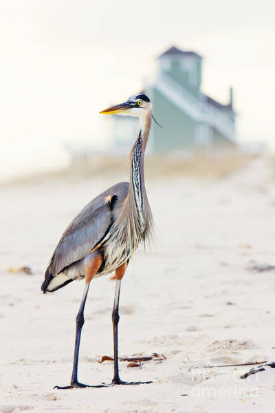 Waterfowl Wall Art - Photograph - Heron And The Beach House by Joan McCool