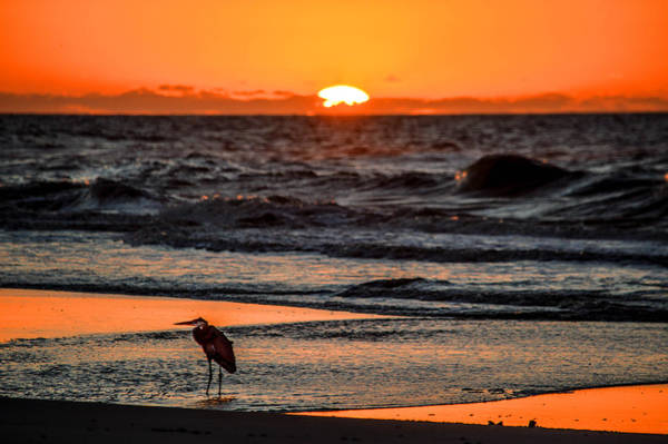 Photograph - Heron And The Rising Sun by Michael Thomas