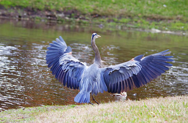 Photograph - Heron Bank Landing by Deborah Benoit
