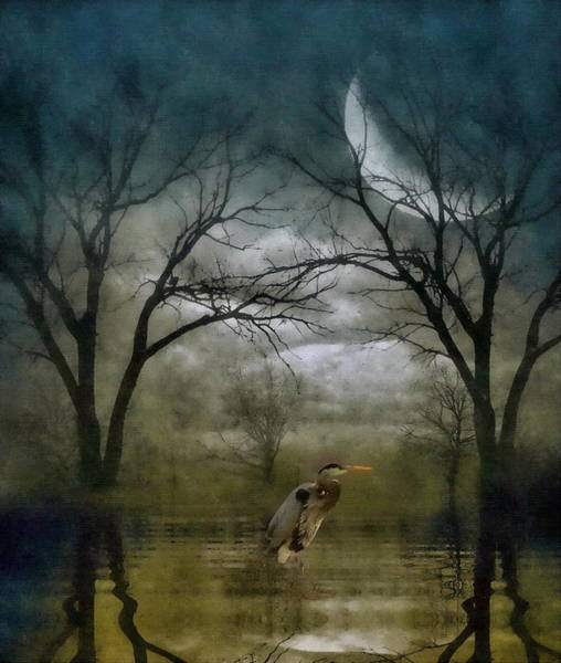 Art Print featuring the photograph Heron By Moon Glow  by Andrea Kollo