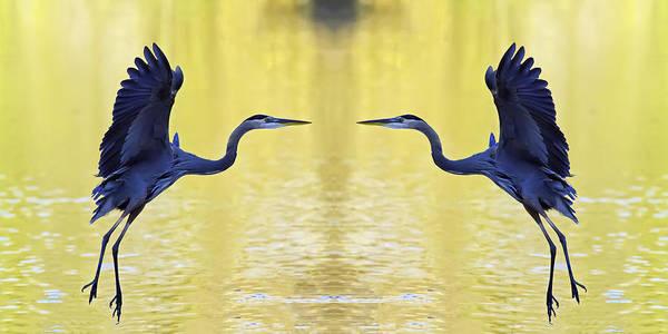 Photograph - Heron Dance by Jim Dollar
