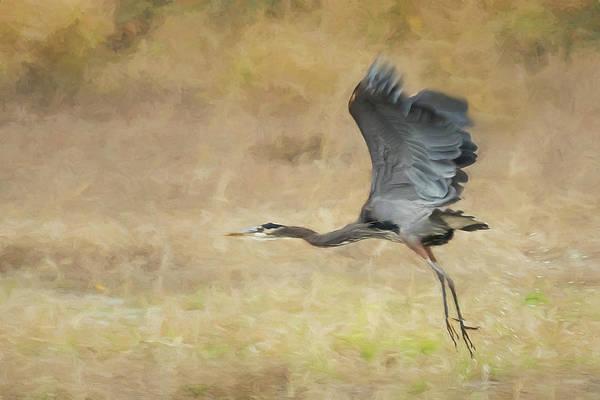 Photograph - Heron Flying Abstract by Belinda Greb