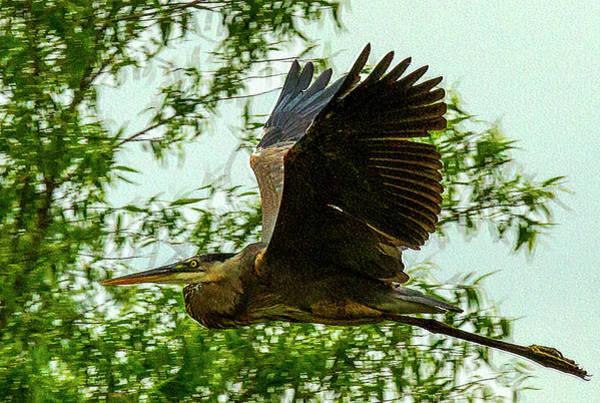 Photograph - Heron Gone by Jeff Kurtz