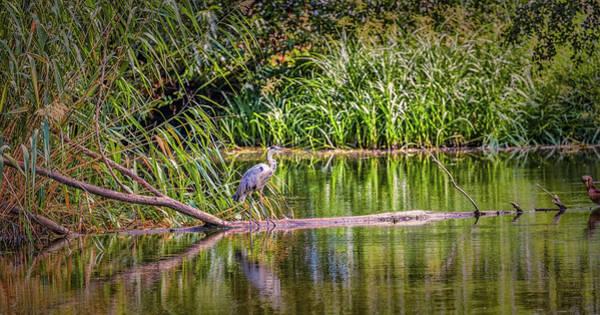 Photograph - Heron #h8 by Leif Sohlman
