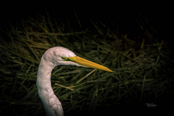 Photograph - Heron Head by Bill Posner