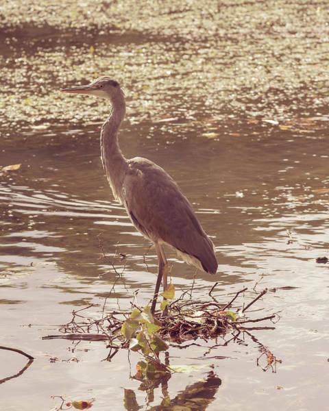 Photograph - Heron In Public Park C by Jacek Wojnarowski