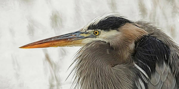Photograph - Heron In Snow by Wes and Dotty Weber