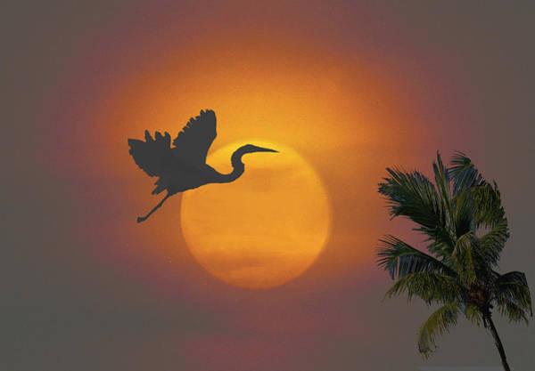 Digital Art - Heron In Sunset by Richard Nickson