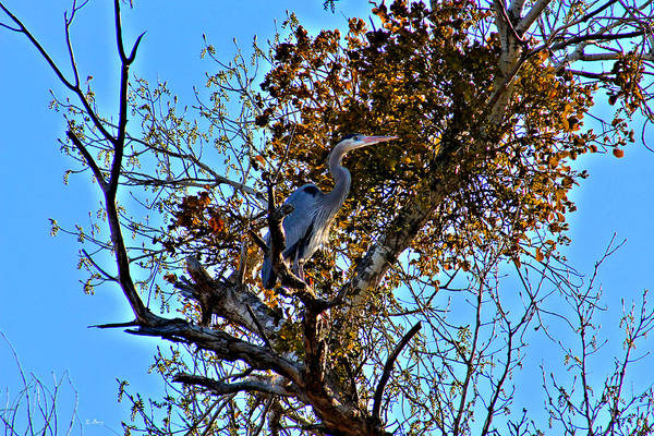 Wild Life Mixed Media - Heron In Tree by G Berry