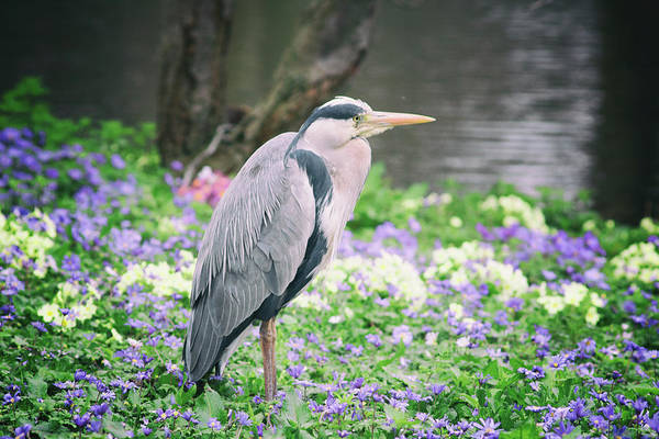 Wall Art - Photograph - Heron Lookout by Martin Newman