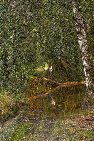 Photograph - Heron On Path #g7 by Leif Sohlman