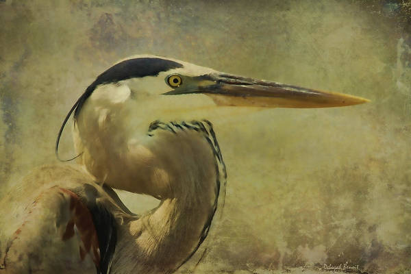 Heron On Texture Art Print