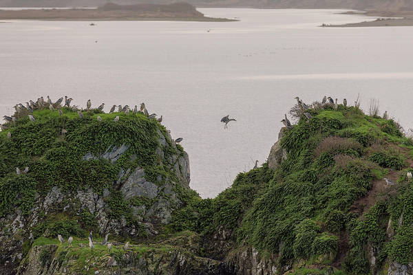 Wall Art - Photograph - Heron Party On The Rock by Loree Johnson
