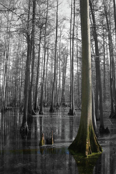 Photograph - Heron Pond by Dylan Punke