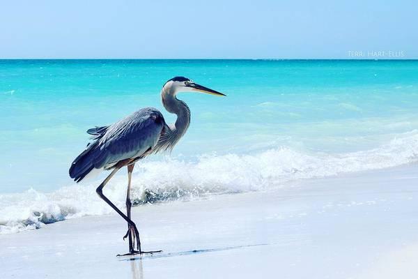 Photograph - Heron by Terri Hart-Ellis