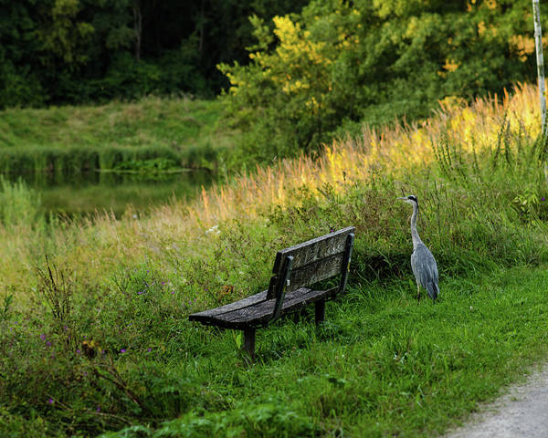 Photograph - Heron Watching The Sunset by Miguel Winterpacht